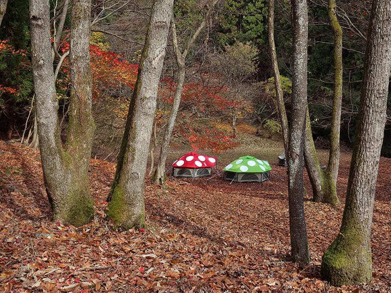 赤いキノコと緑のキノコテント