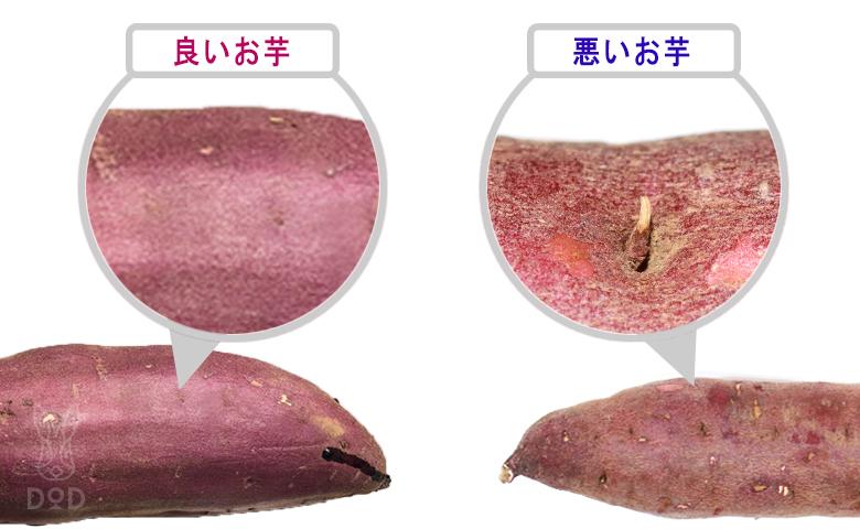焼き芋食べ比べ1