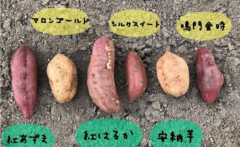 6種の焼き芋を食べ比べ。お気に入りを見つけてキャンプやお家で楽しもう。